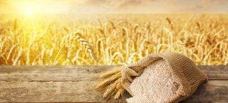 Bracon Ash Communion 06 August 2020 - Celebrating Harvest