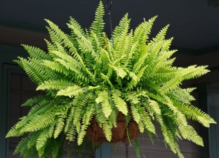Flordon Plant Sale