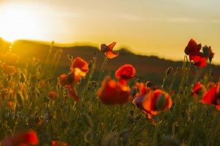 Bracon Ash : Remembrance Sunday 8 November